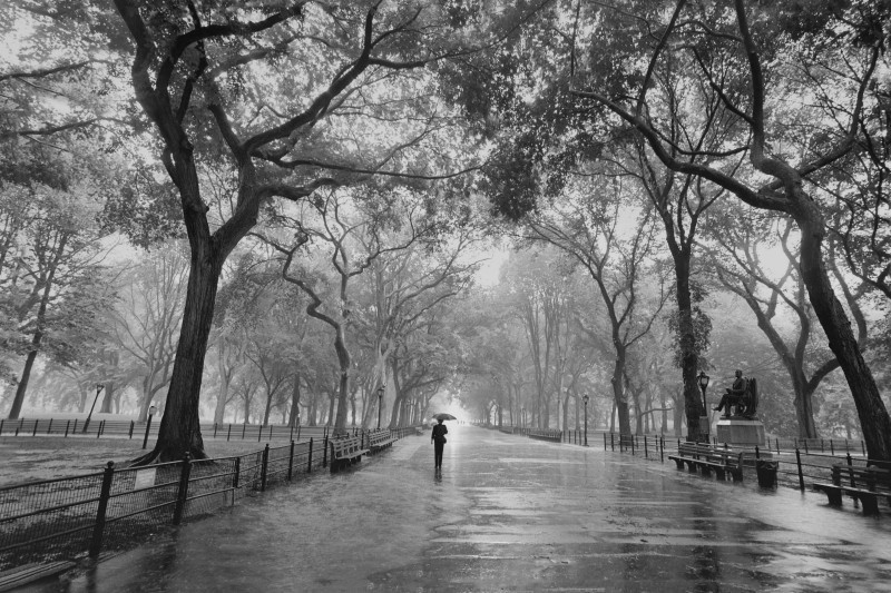 Poets Walk Central Park New York City - Framed Art Print | Frameshop