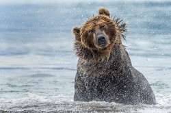 Shaking - Kamchatka, Russia by Giuseppe D\\\'Amico