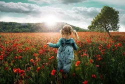 Into the Poppies by John Wilhelm