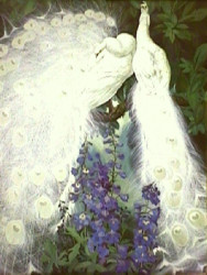 White Peacocks and Delphiniums by Jessie Arms Botke