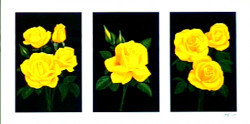 Tryp Yellow Roses