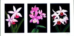 Tryp Orchids by Andrew Patsalou