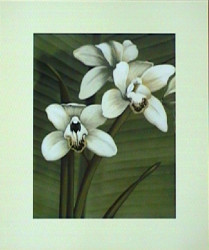 Orchid with Palm I by Andrea Trivelli