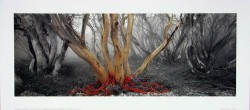 Snowy River Gums by Ken Duncan