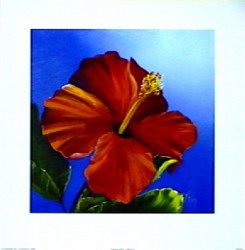 Crimson Red - Hibiscus