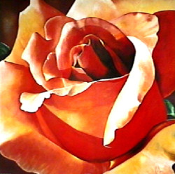 Scent Of A Rose by Karen Foley