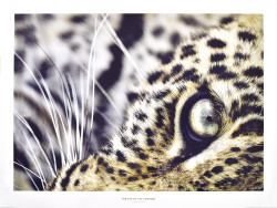 The Eye of the Leopard by Christine & Michel Denis-Huot
