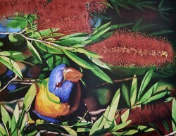 Parrot Wattle Feed by Unknown