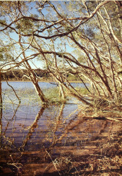 Lake Benaroon, Fraser Island by Leigh & Barbara Hemmings