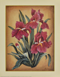 Red Iris's by Cebo