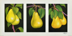 Triptych, Pears by Andrew Patsalou