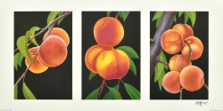 Triptych, Peaches by Andrew Patsalou
