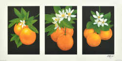 Triptych, Oranges by Andrew Patsalou