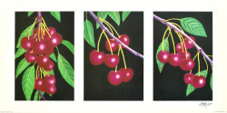 Triptych, Cherries