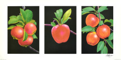 Triptych, Apples