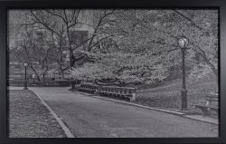 Central Park in Early Spring by John Anderson