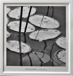 Lily Pads by David Gray