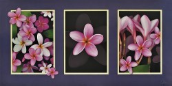 Pink Frangipani Tryptich by Carl Hensel