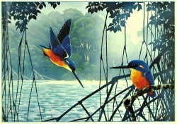 Azure Kingfishers by David H Stacey