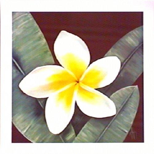 Harmony Frangipani