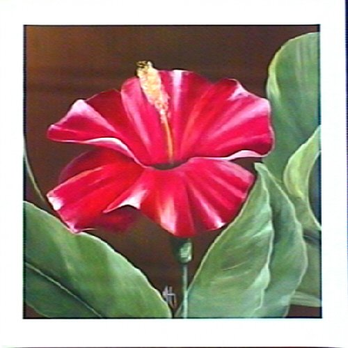 Harmony Hibiscus