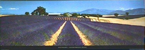 Lavender Provence