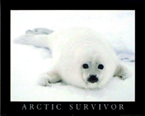T05-Arctic Survivor