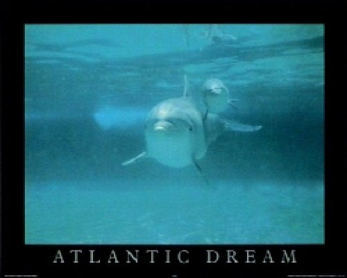 T11-Atlantic Dream (Dolphins)