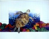 HH02-Turtle