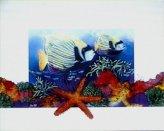 HH06-Starfish