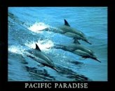 T01-Pacific Paradise