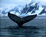 T04-1-Whale in ice