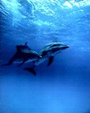 T06-Dolphins