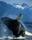 T07-Whale