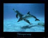 T12-Idiosynchrasy (Dolphins)