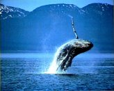 T14-Whale