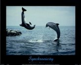 T15-Synchronicity (Dolphins)