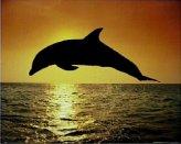 T16-Dolphin Sunset