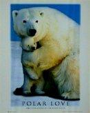 T21-Polar Love